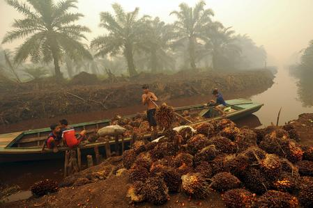 Indonesian planters see drought hitting palm oil output