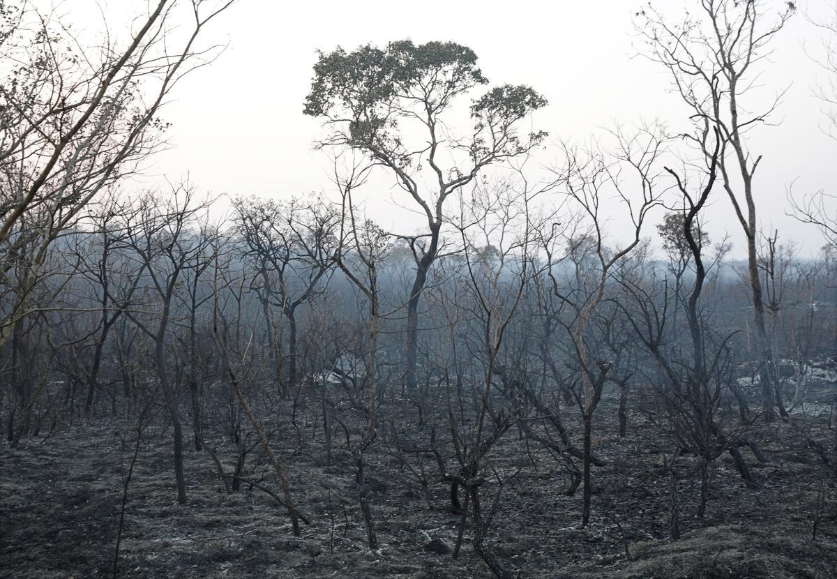 Terwyl bosveldbrande woed, soek Bolivia hulp van die SuperTanker-vliegtuig