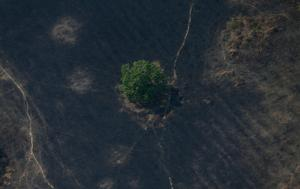 Amazon under threat from deforestation and fires