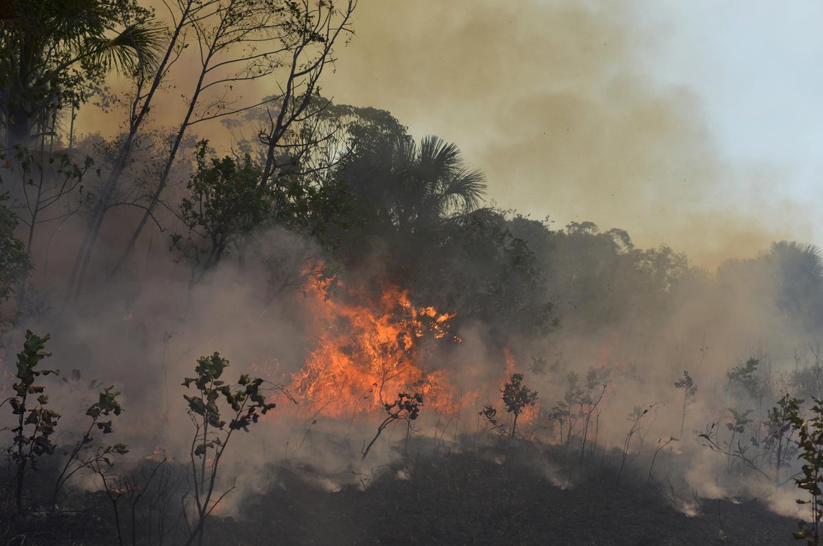Ontbossing in Brasilië neem in Augustus toe, wat die kommer by Amazon toevoeg