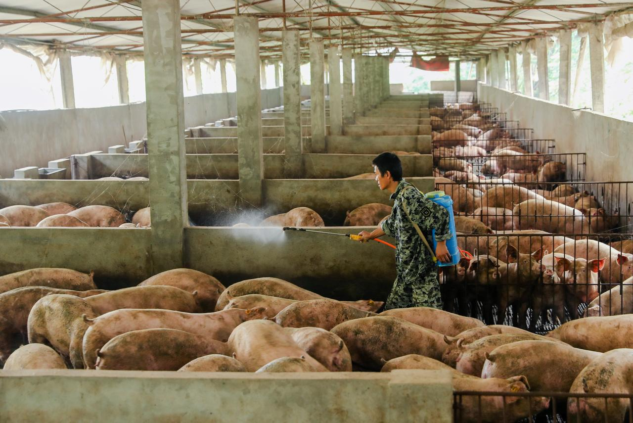 China vice premier urges hog production recovery amid swine
