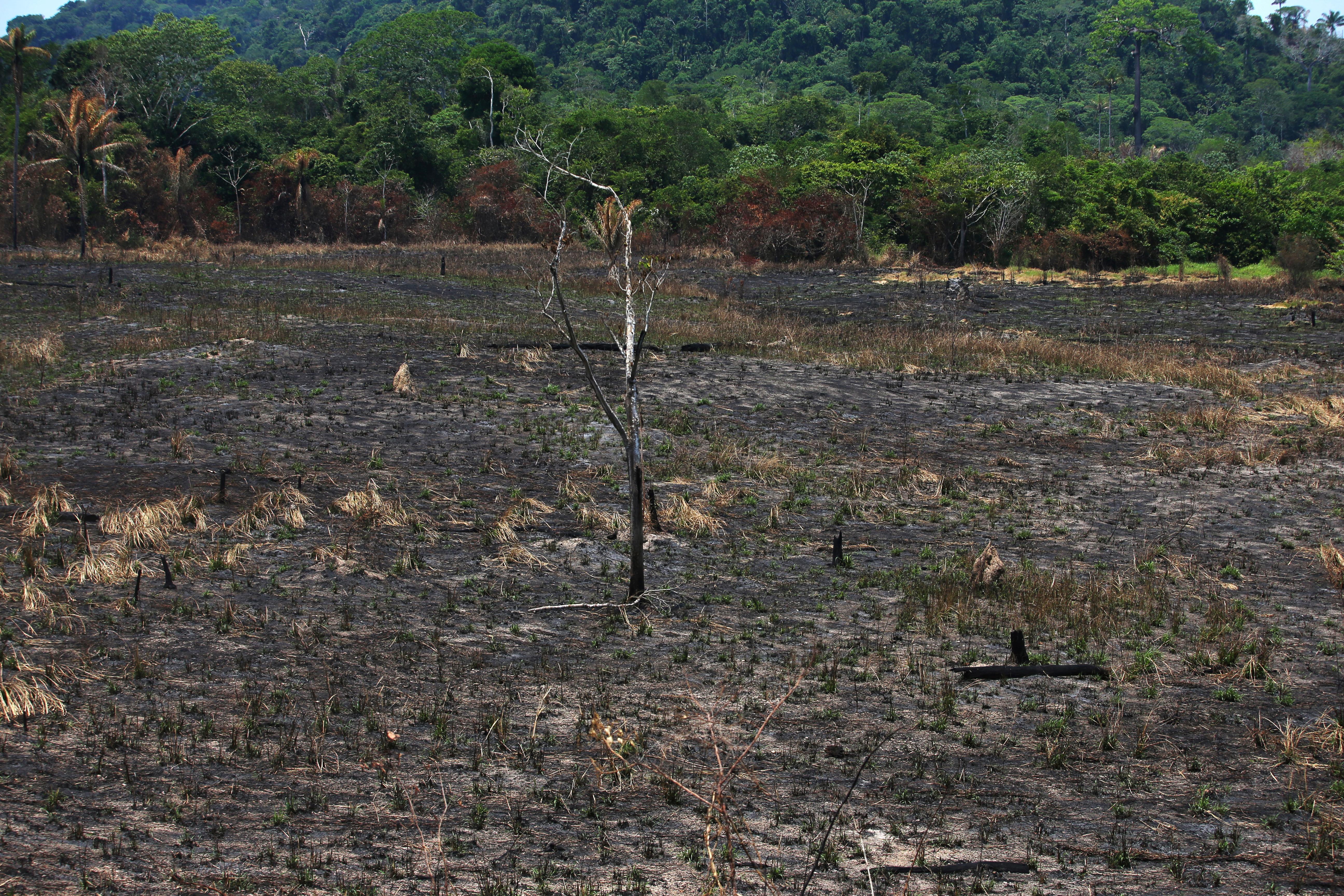 'Day of Fire': Blazes ignite suspicion in Amazon town
