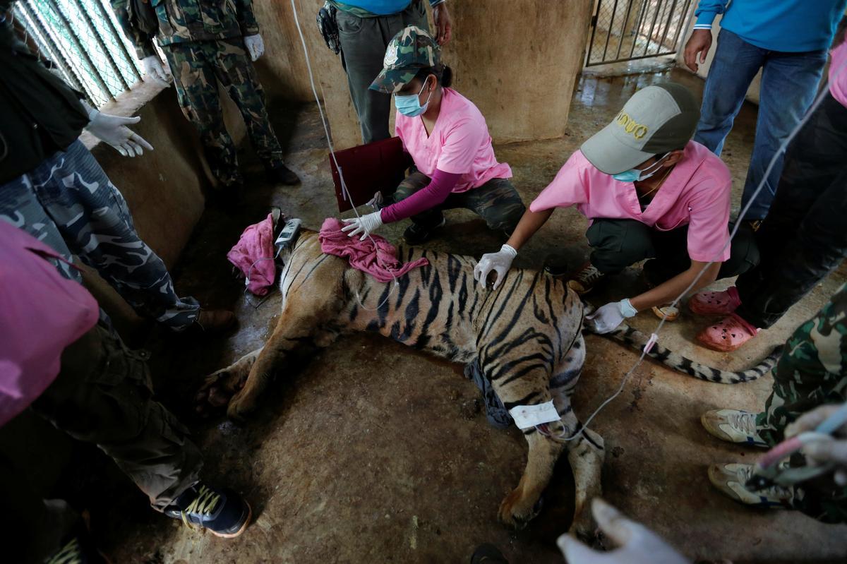 Talle tiere wat uit berugte Thaise tempel gered is, is dood: media