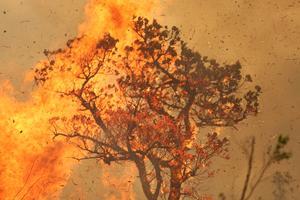 Wildfires rage in Brazil's Amazon