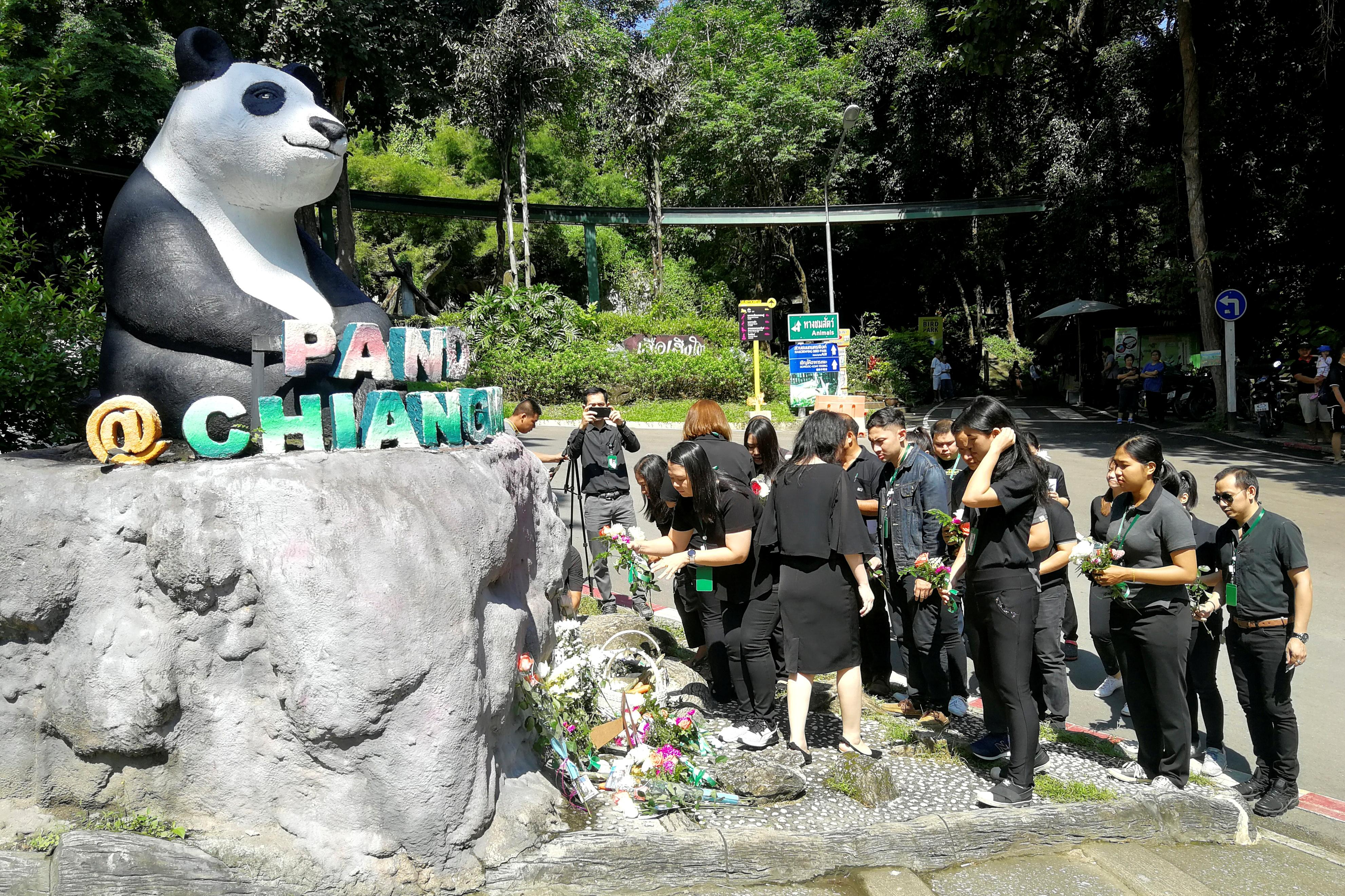 Panda autopsy preparations at Thai zoo as Chinese experts arrive