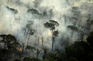 Brazil's burning Amazon from above