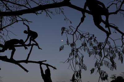 Editor's Choice Pictures