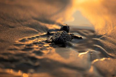 Endangered turtles bred in captivity to help save species in Israel