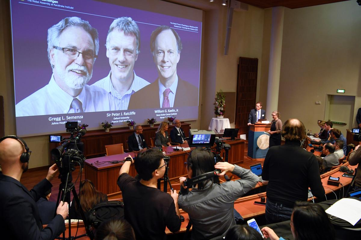 Nobel Medicine Prize won by doctors for work on cells' response to...