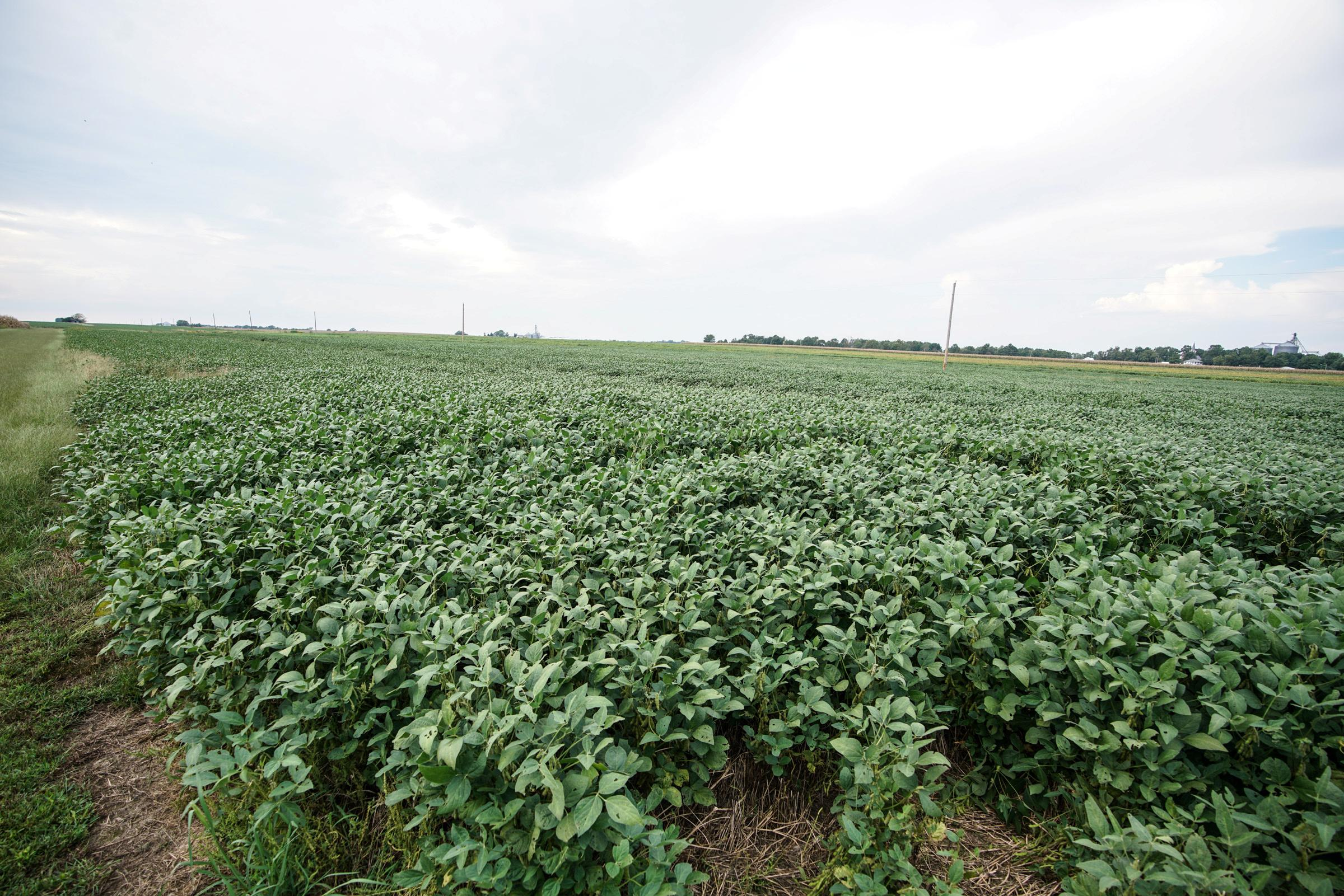Column: U.S. soybean supply exodus: fleeting or final?