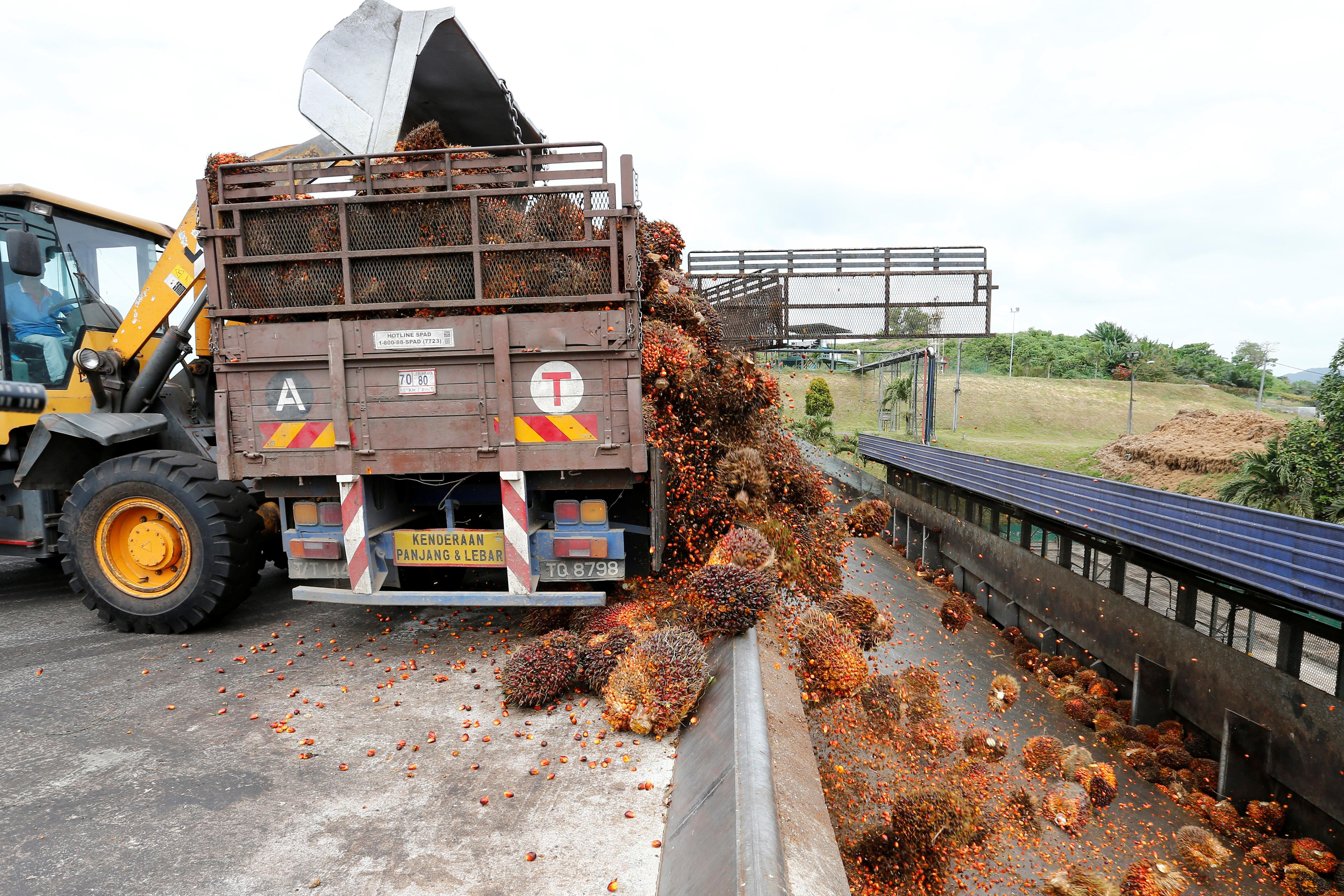 Malaysia to cut export duties for crude palm oil in 2020