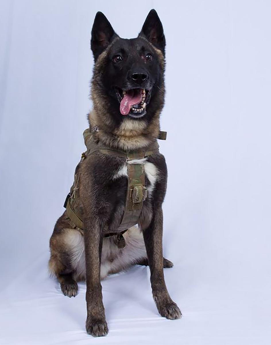 U.S. hero dog wounded in Baghdadi operation shall go unnamed for now