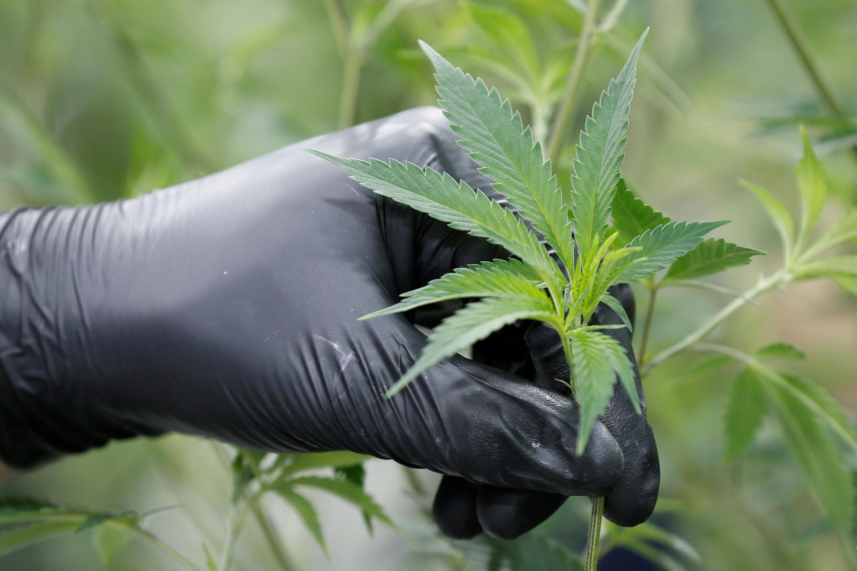 Quebec, Newfoundland Labrador say they will not allow cannabis...