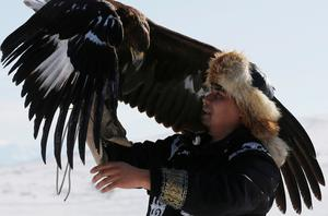 Eagle hunting in Kazakhstan