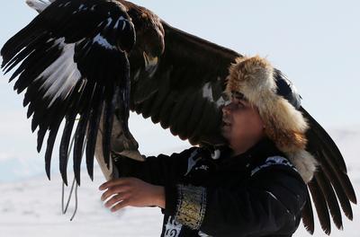 Eagle hunting in Kazakhstan