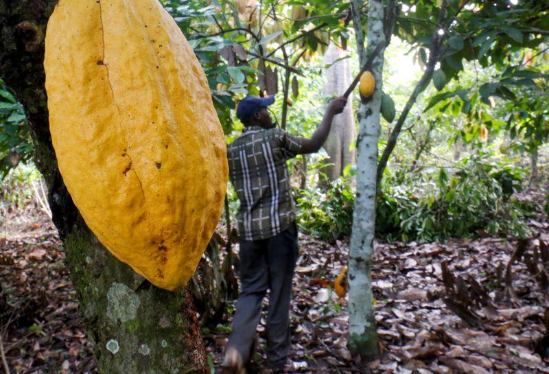 Ivory Coast 2019/20 cocoa arrivals 1,153,000 T by Jan. 5...