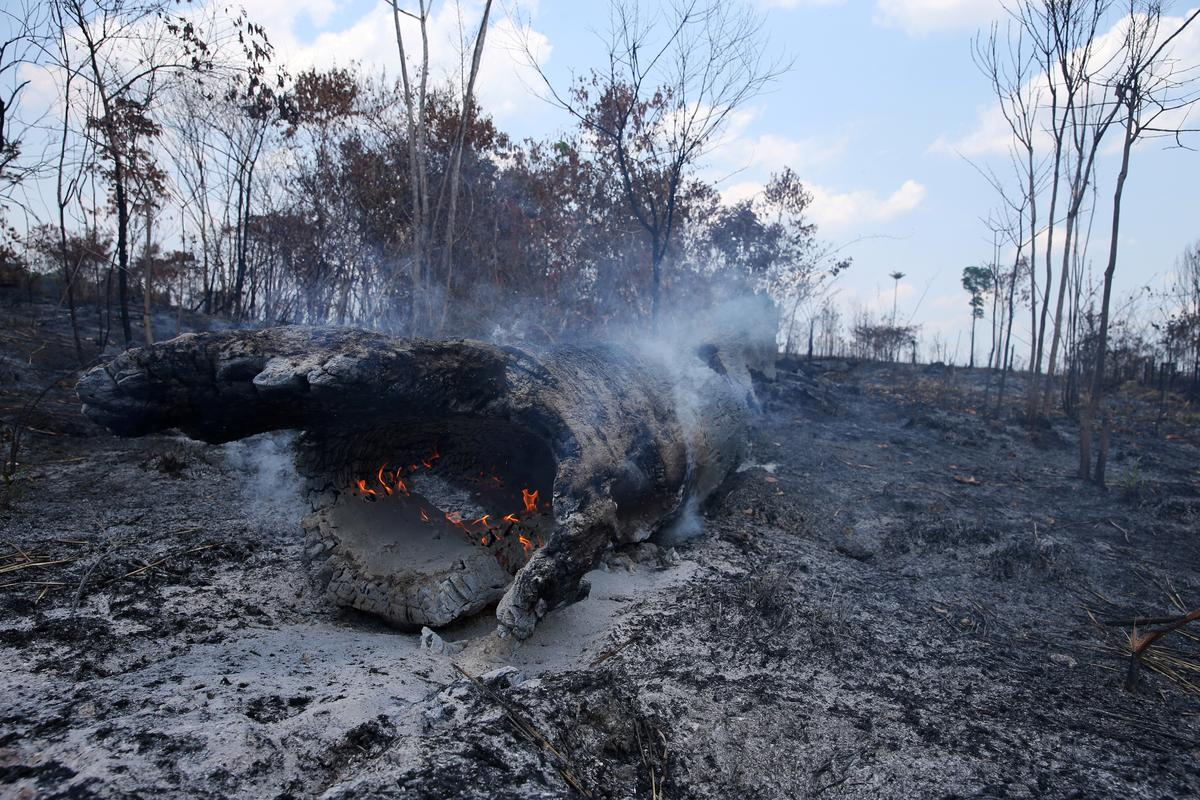 Fires in Amazon forest rose 30% in 2019