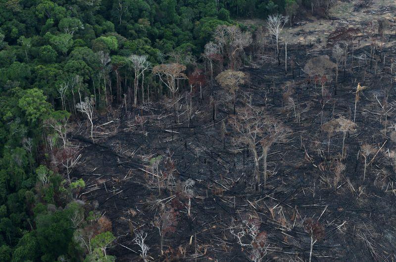 Brazil Amazon deforestation jumped 85% in 2019 vs 2018: government...