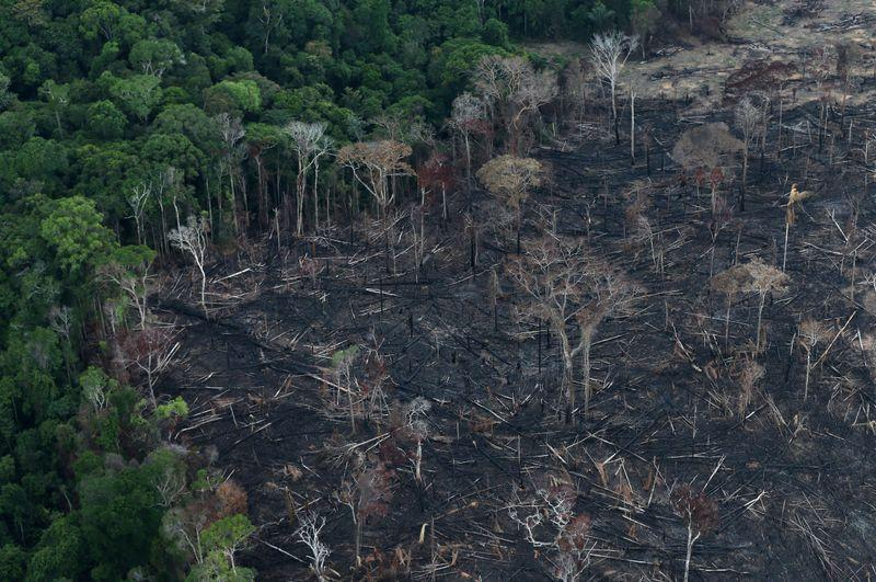Image result for reuters: Brazil Amazon deforestation jumped 85% in 2019 vs 2018: government data