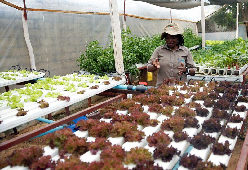 In Zimbabwe, a backyard hydroponic farm beats drought to grow...