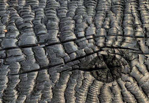 Australia's charred landscape