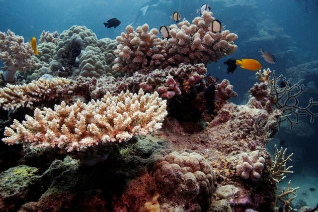 FILE PHOTO: Reef fish swim above recovering coral colonies on the Great Barrier Reef off the coast of Cairns, Australia October 25, 2019. REUTERS/Lucas Jackson/File Photo