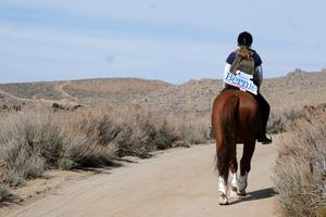 Bernie Sanders supporter canvasses Nevada on horseback