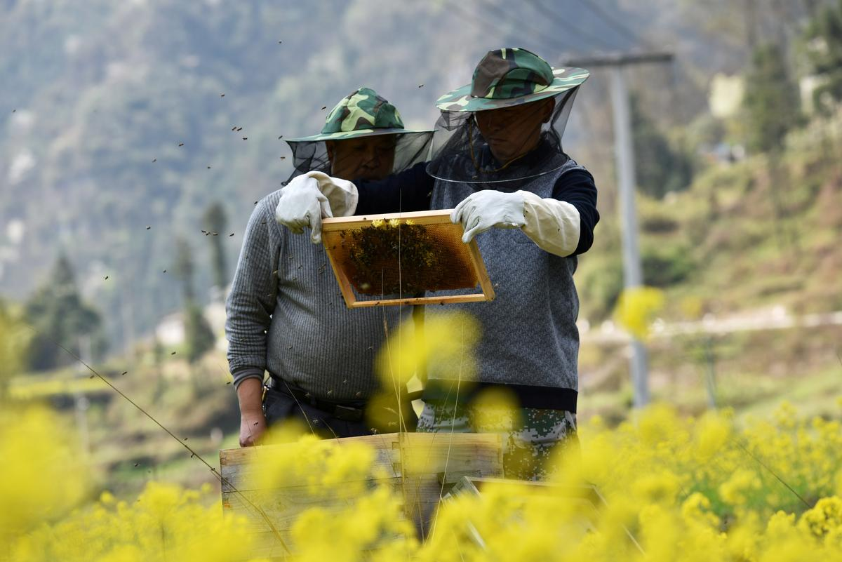Coronavirus stings world's top honey makers with China beekeepers locked down
