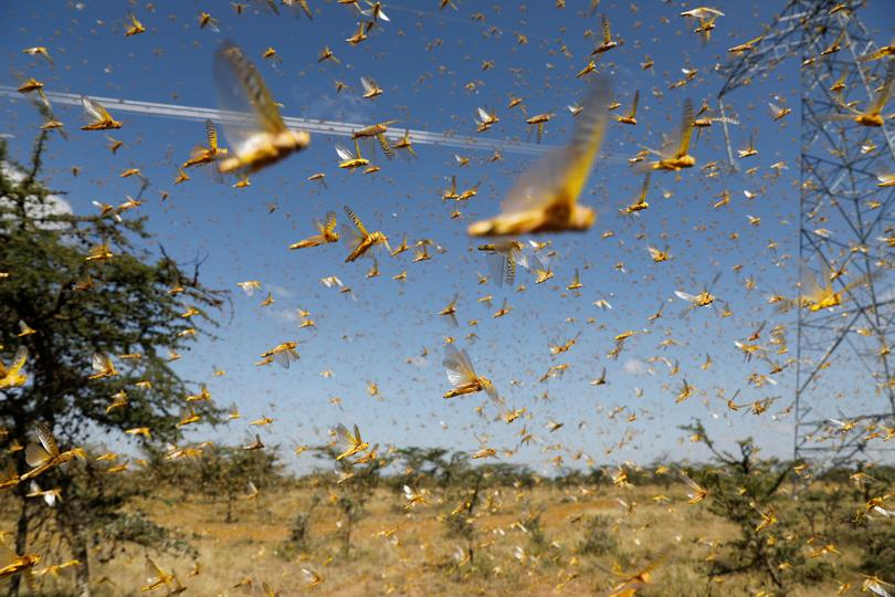 East Africa faces new locust threat | Pictures | Reuters