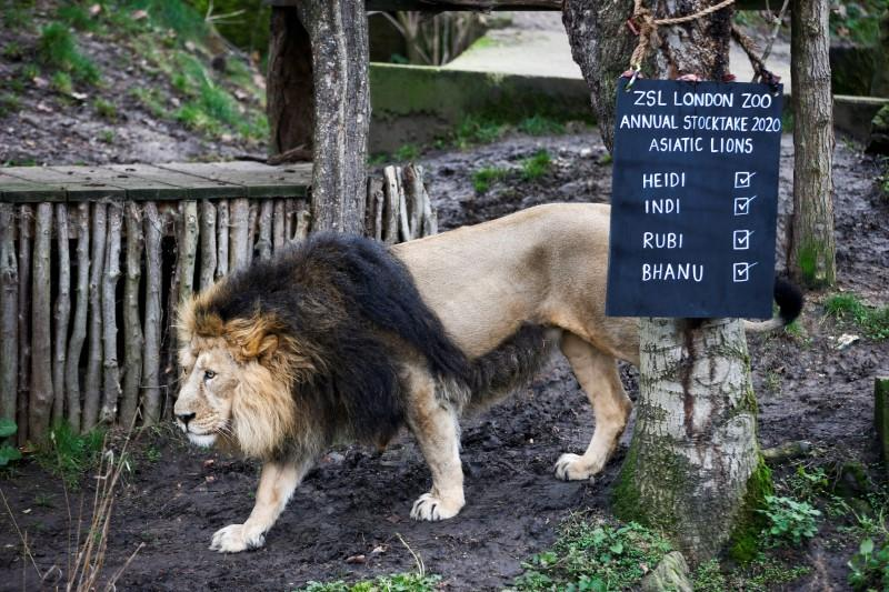 London Zoo seeking donations to safeguard animals