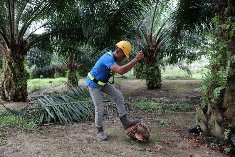 Malaysian palm oil groups urge Sabah state to allow work to resume