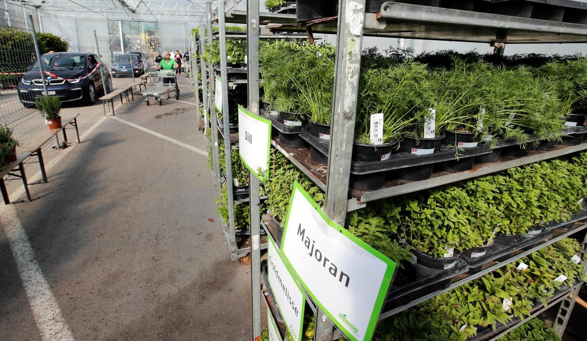 Swiss drive-through garden centre aims to nurture jobs during coronavirus