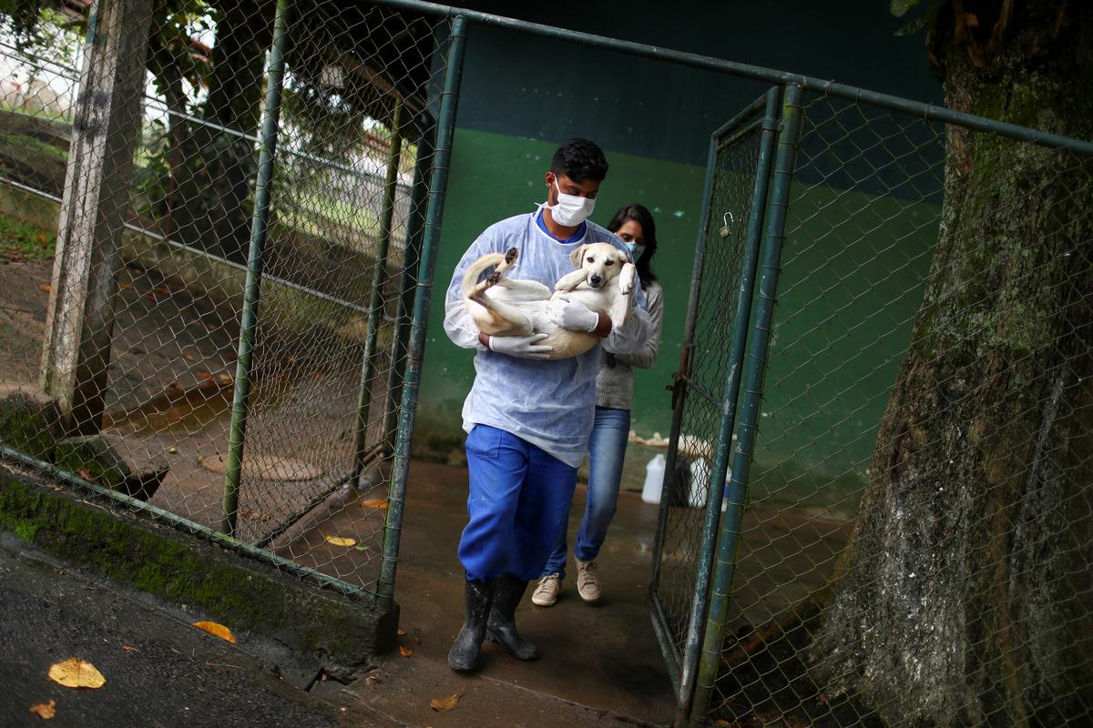 A worker takes Dorothy to a car before her adoption at a shelter managed by the Rio de Janeiro City Hall, that launched a pet delivery campaign to find homes for abandoned animals, during the coronavirus disease (COVID-19) outbreak, in Rio de Janeiro, Brazil May 15, 2020. Picture taken May 15, 2020. REUTERS/Pilar Olivares
