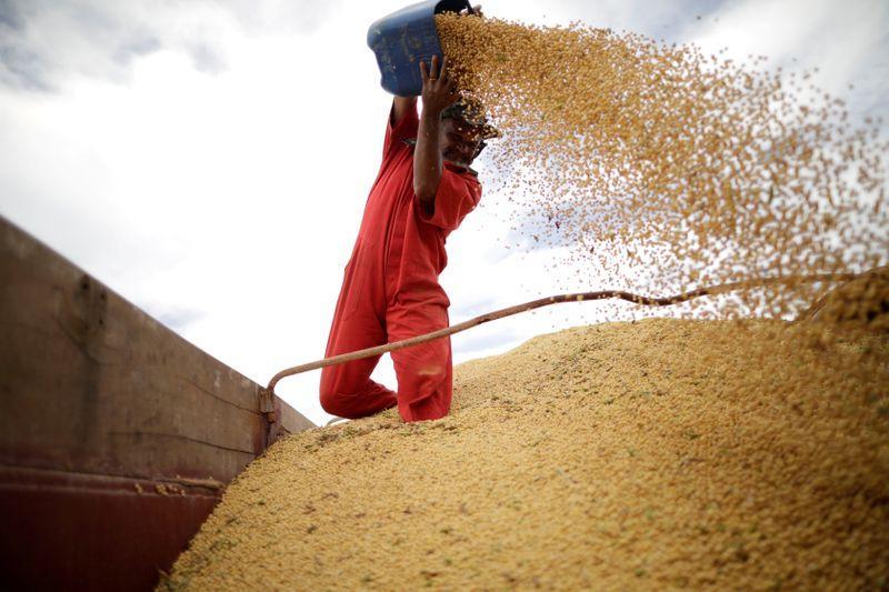 BrasilAgro prevê aumento de ao menos 12% na área de grãos em 20/21