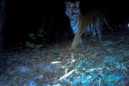 Elusive animals caught on remote cameras