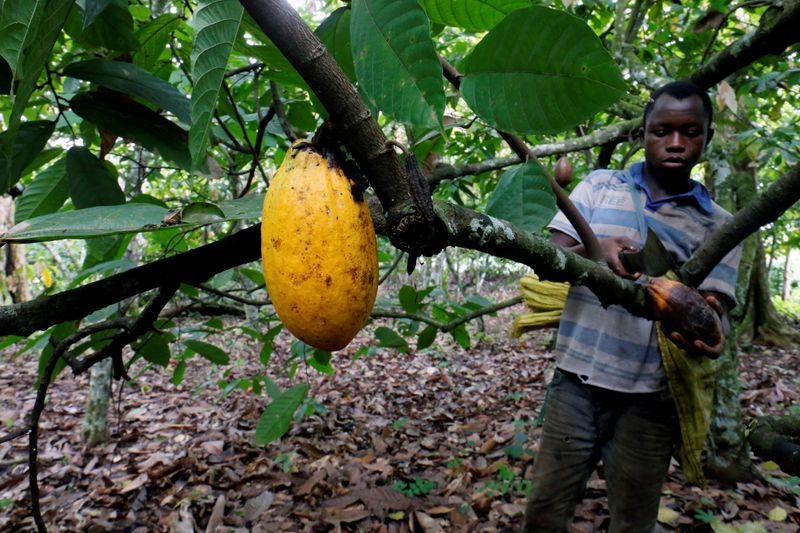 Ivory Coast 2019/20 cocoa arrivals reached 2.004 mln t by July 31 -CCC data - Reuters