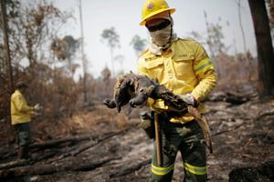 Amazon again under threat from forest fires