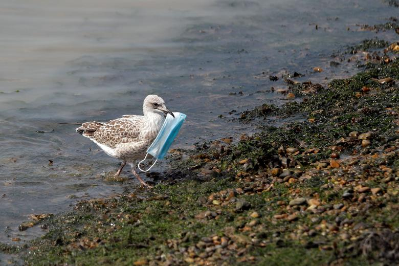 A seagull carries a protective face mask at the port of Dover, Britain. REUTERS/Peter Nicholls