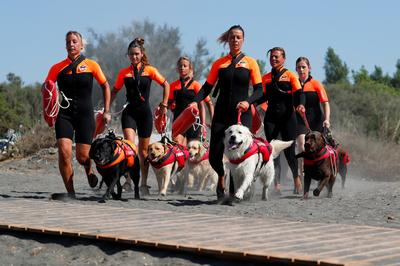 Pooches join Italy beach patrol