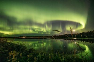 The surreal Northern Lights