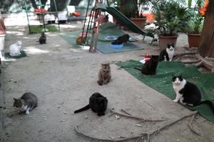 Cat shelter takes in feline COVID orphans