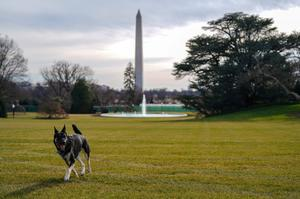 Presidential pets through the years