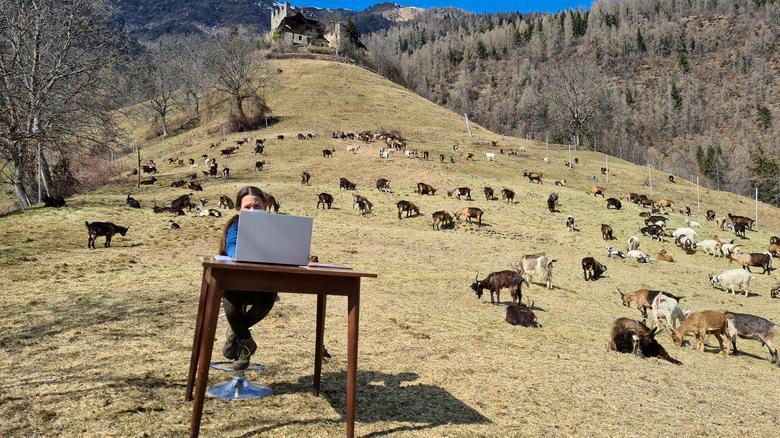 Η 10χρονη Fiammetta παρακολουθεί τα διαδικτυακά μαθήματά της, περιτριγυρισμένα από το κοπάδι αιγών της οικογένειάς της στο Caldes, βόρεια Ιταλία, Μάρτιος 2021. Martina Valentini - Γραφείο Τύπου Val di Sole
