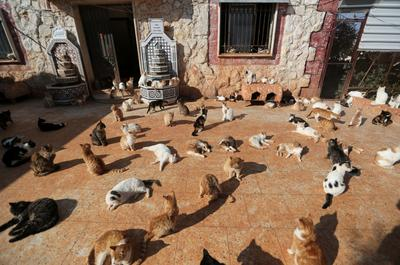 Syrian sanctuary houses over 1,000 cats stranded by war