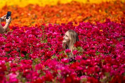 Flower fields of Carlsbad
