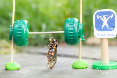 Photographer turns cicadas into portrait subjects