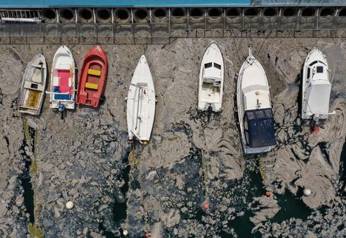Turkey's coast mired in 'sea snot'