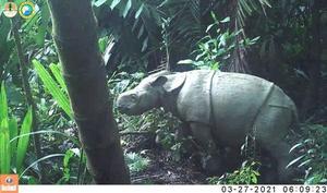 Elusive animals caught on remote camera