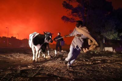 Wildfires rage across Greece