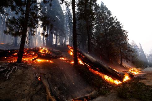 Wildfires threaten California's majestic sequoia trees